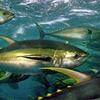 fisher_man