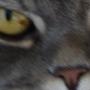 Profil de schyns