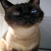 jeffrey_odonald's profile