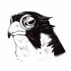 matt_falcon