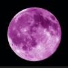 tracy_moon