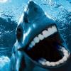 sharkattackomnom