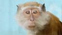 hgerson2020's profile