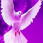 purpledove